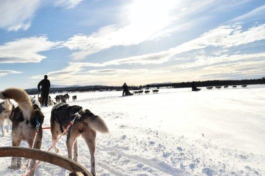 singlereisen.de_Lappland_Hundeschlittenausflug