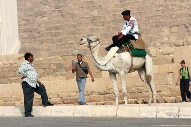 Kamele sind überall an den Pyramiden zu finden.