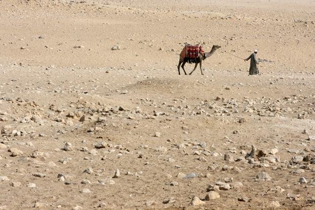 Wer möchte, kann auf den Kamelen reiten.