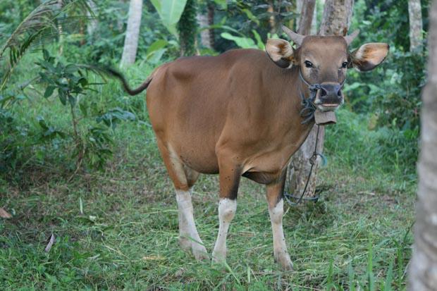 Was will uns der Blick dieser Kuh sagen?