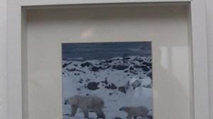 Große und kleine Eisbären fanden hier Verwendung