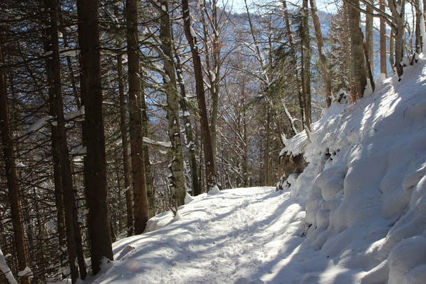 Anfangs führte der Weg durch Wald