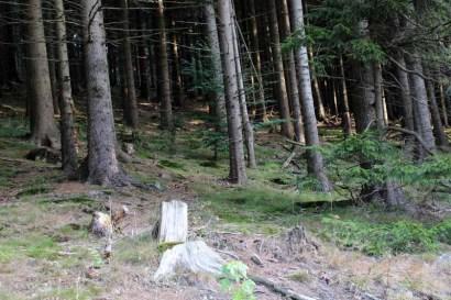 Immer wieder fasziniert der Wald