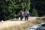 Viele Wanderer sind unterwegs