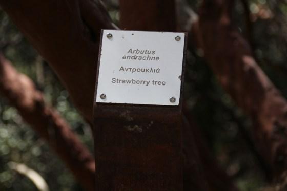 An den Bäumen und Sträuchern informieren kleine Tafel die Wanderer über botanische Besonderheiten