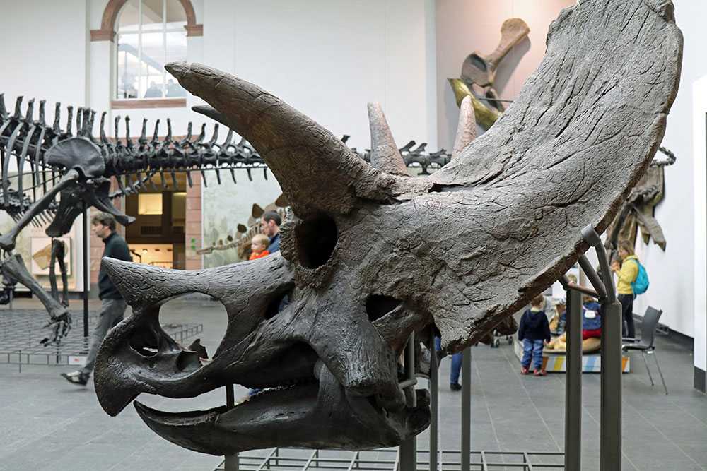 Museum Bremen Dinosaurier