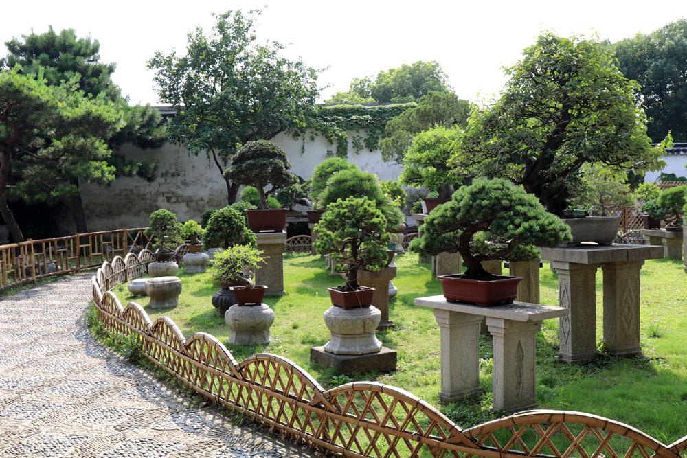 Die Bonsai-Sammlung im Garten des bescheidenen Beamtens in Suzhou in China ist beeindruckend