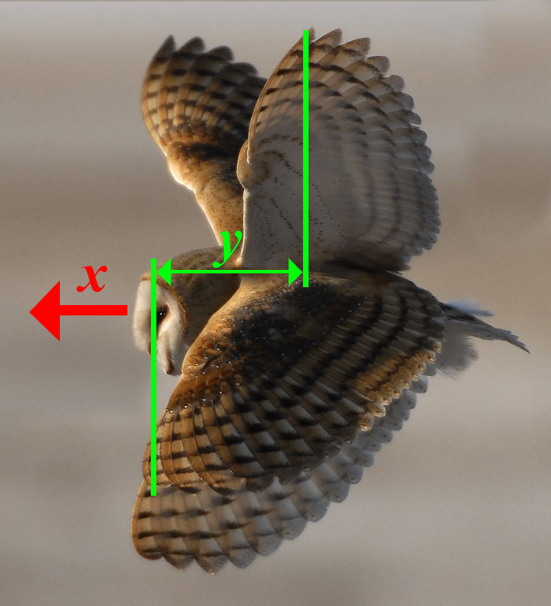 duck wing diagram honeywell wiring thermostat why a bird pushes it s wings forward on the down stroke in this i have composited up and positions of barn owl if we imagine that time between these images body
