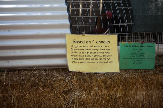 Chicken run, chooks