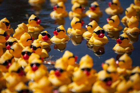 rubber ducks, event photographer canberra