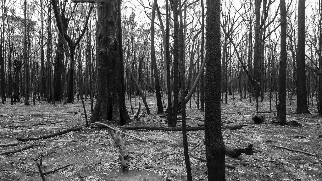 Kilometre after kilometre of bushfire ravaged national parks