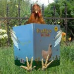 Chicken reading Buffy's Wish