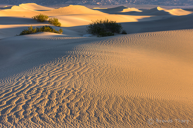Sand dunes with patterns.