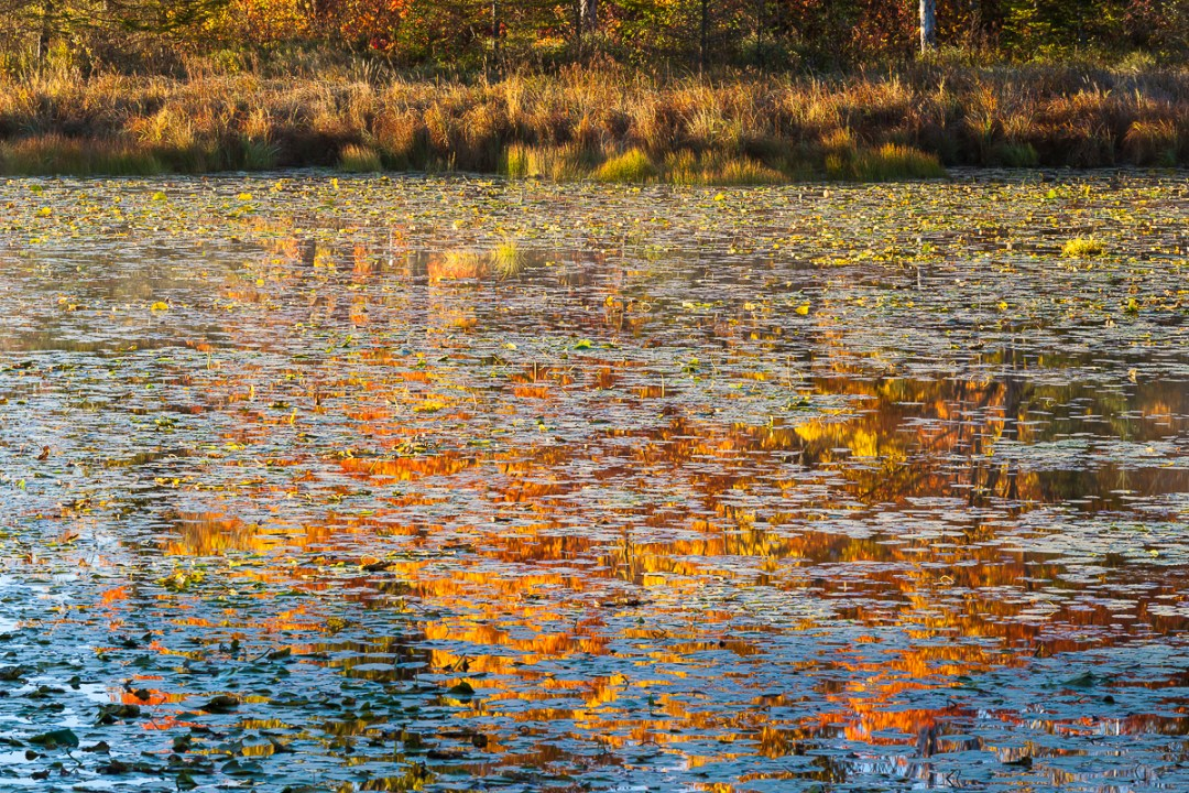 Fall foliage colors reflecting in pond.