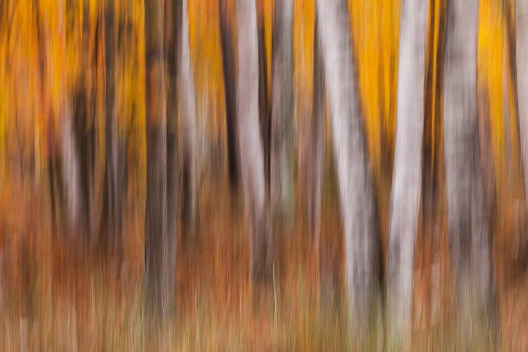 Blurred impression of forest in Autumn.