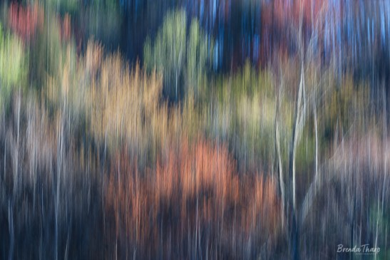 Panned blur of hillside of trees