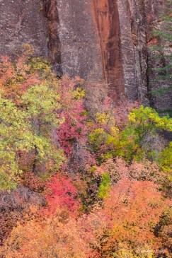 Sandstone Cliff and Autumn Foliage, Utah.