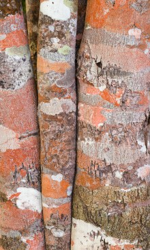 Lichen and trunk patterns, Cuba.