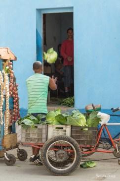 Cabbage Toss, Trinidad.