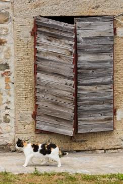 Farm Cat, Italy.