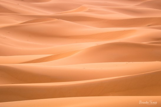Undulating dunes of the Sahara, Morocco.