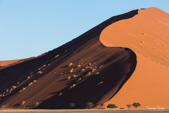 S-Crurve on sand dune, Namibia.