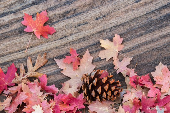 Autumn leaves, pine cone and sandstone.