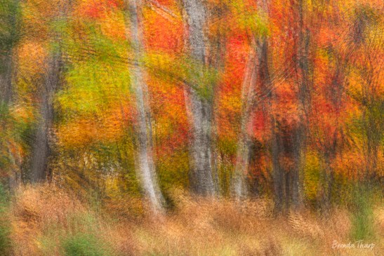 Impressionistic view of trees in Autumn.