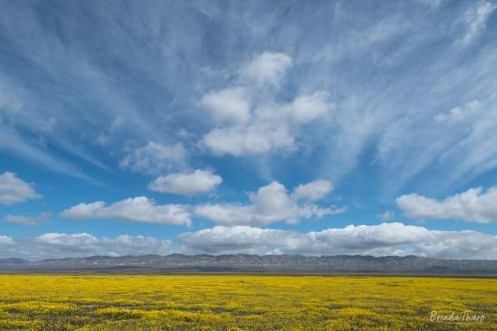 Sweeping Vista in Carrizon Plains, California.