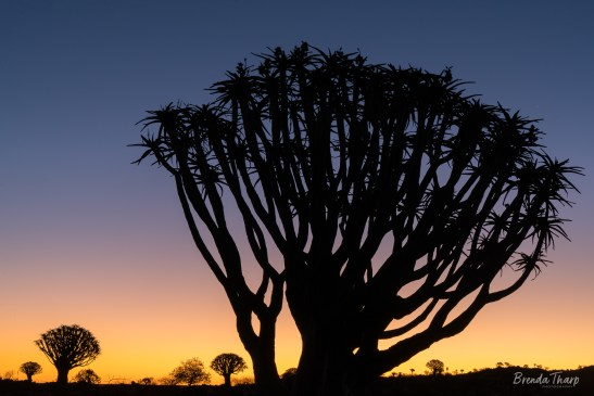 Landscape of Quiver Trees, Namibia.