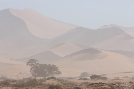 Sand Storm on Dunes at Deadvlei.