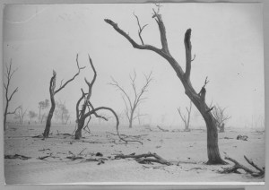 6 Drought in the Wimmera ca. 1944  trees SLV