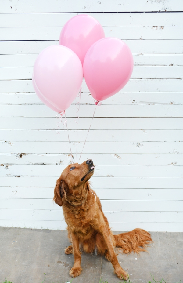 Gender Reveal with your Pet!