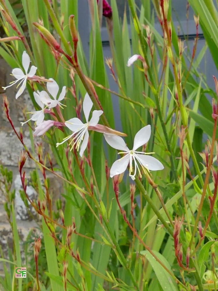Blumen in Poullan-sur-Mer