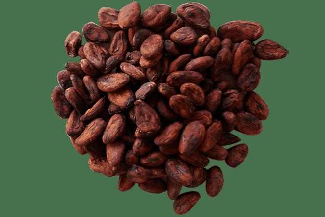 Venta de cacao en grano deshidratado