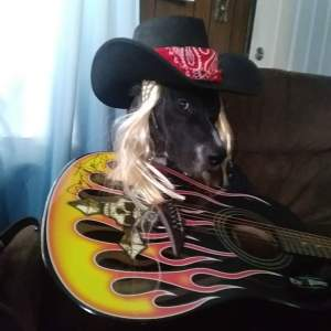 Rock Your Pet Like Bret Contest - Jovi