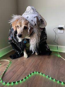 Rock Your Pet Like Bret Contest - Mollie