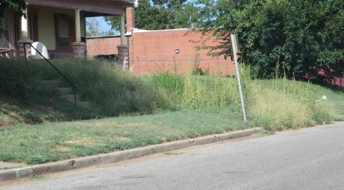 Nuisance weeds problem in OKC story for Oklahoma Gazette