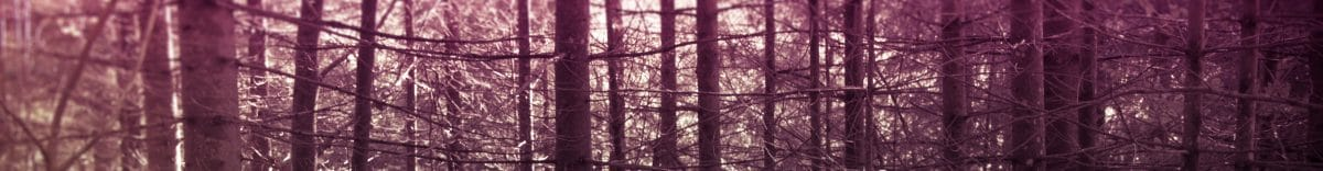 1 Foresta Nera interno