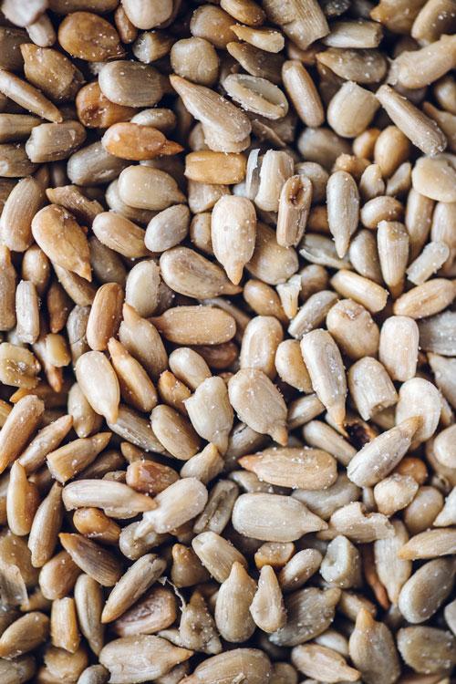 close up of sunflower seeds