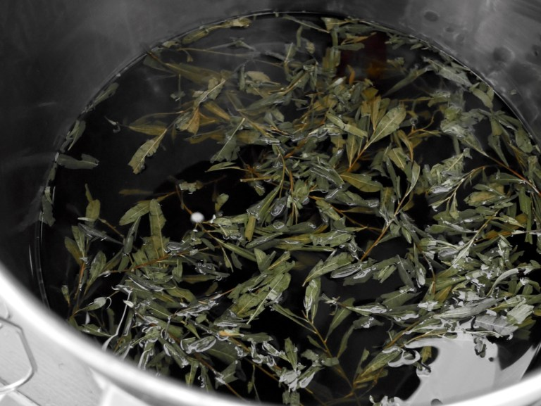 Brewing raw gruit beer with bog myrtle