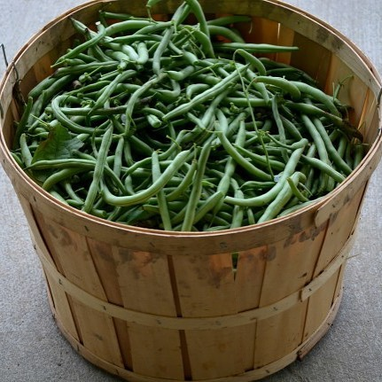 Canning Season is Here! greenbeans gardening canning canninggreenbeans countrylife homegrownhellip