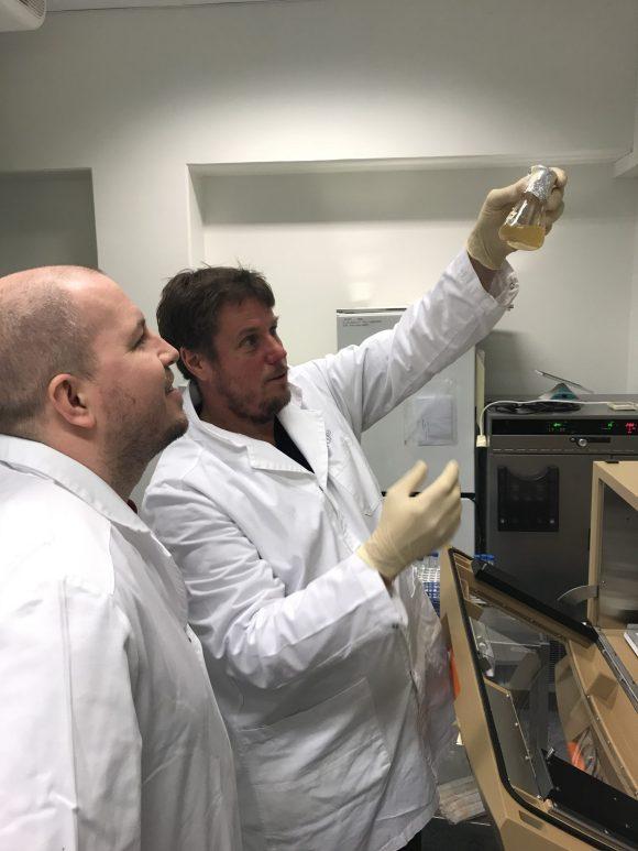 Flere typer kveik har blitt testet