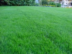 Lawn Rejuvenation Service
