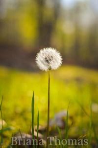 Golden Light {Spring Pictures}