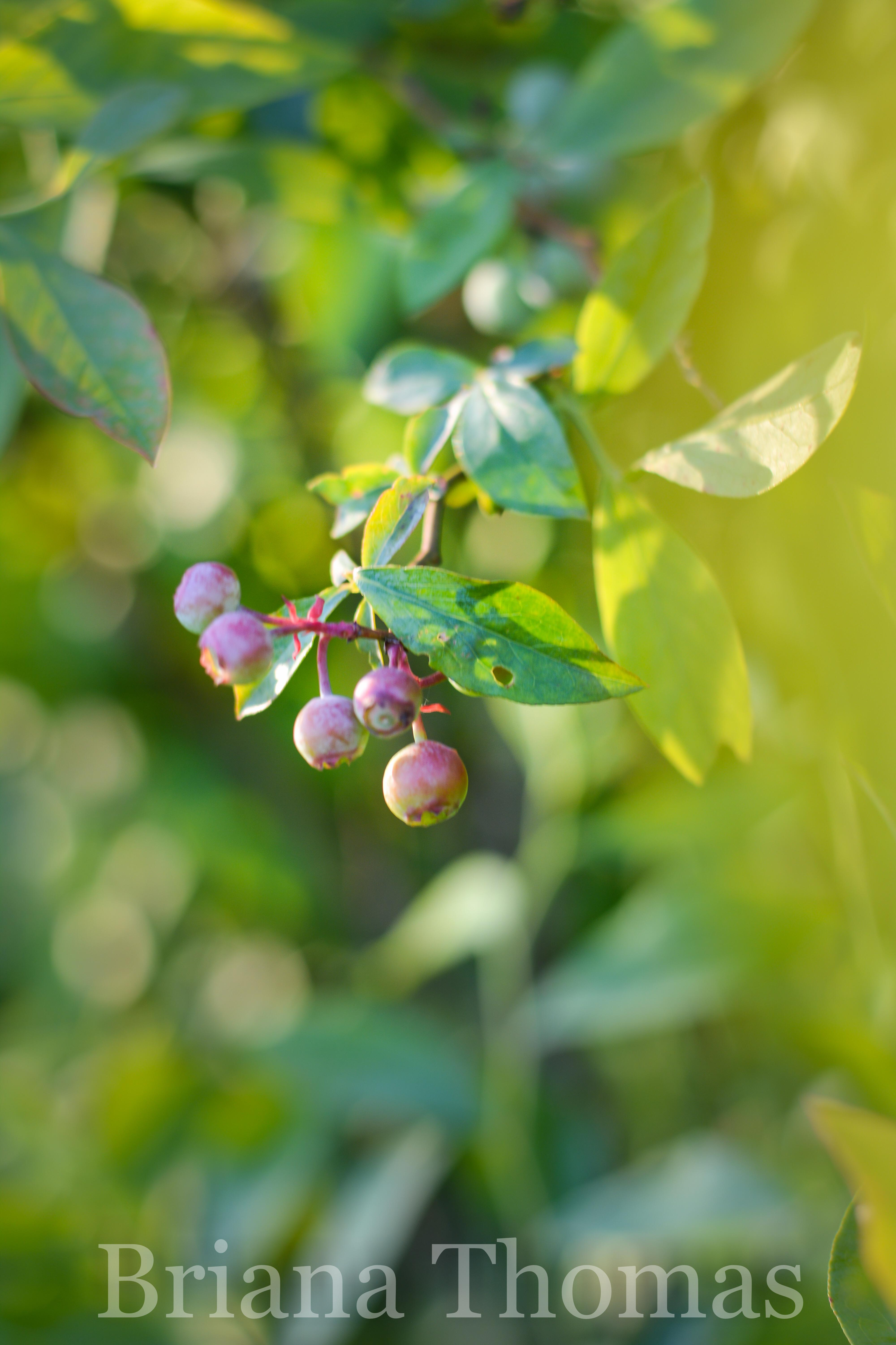 Up on the blog today - honeysuckle treasures and John Donne poetry.  Golden light of nature and literature for edification and encouragement!