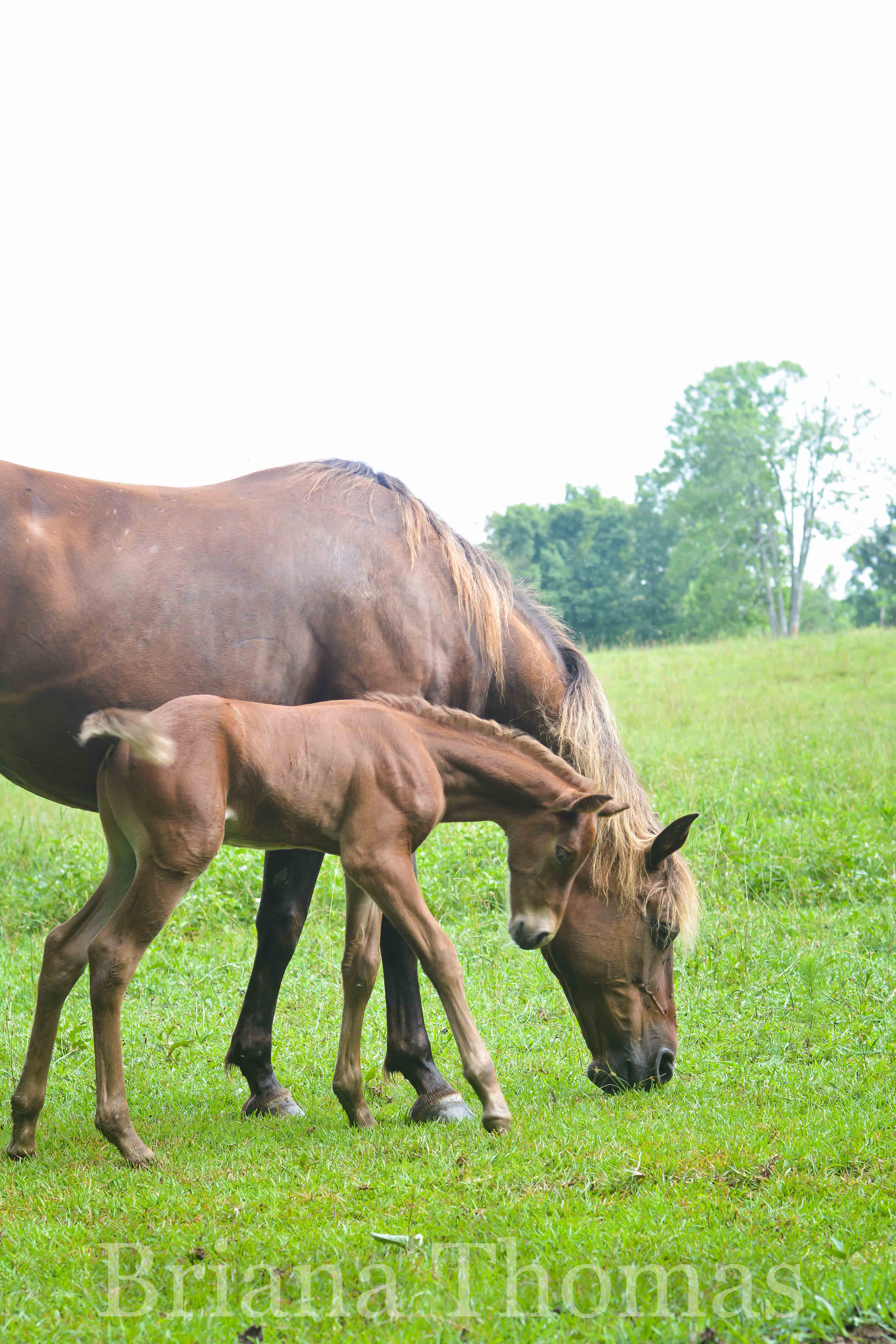 We have a new foal and he needs a name! Suggestions welcome. Sire is Rocky Mountain Man (Sewell's Sam son) and dam is Sweetwater's Peaches & Crème.