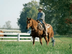 This picture is from the Kentucky Horse Park web site The park is made up of 1200 acres dedicated to man's relationship with the horse.