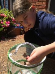 Painted Lady Release
