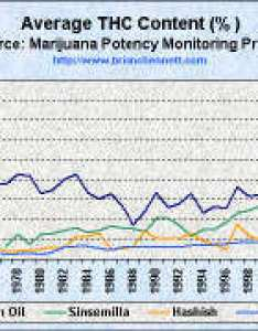 Marijuana strong stronger strongest also truth the anti drugwar trends in average thc content seized samples rh briancbennett
